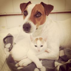 #cute #cuddle #buddies! #dogs #cats #pets #adorable