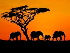 the bucket list, silhouett, african safari, sunsets, south africa, giraff, dream vacations, place, bucket lists