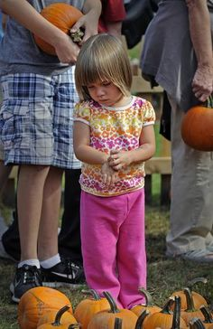 Alexis Bithoney, 2, decides which pumpkin to choose at the fifth annual Great Pumpkin Give-A-Wey. Amelia Kunhardt/The Patriot Ledger, Purchase this photo, $8