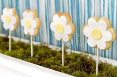 yellow white daisy theme flower girl baby shower flower cookie pops