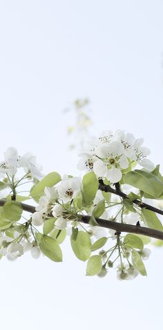 beautiful spring blossoms