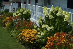 Here's a terrific landscape look & a great way to spruce up a foundation planting.  Tall Hydrangea shrubs give structure while Rudbeckia black-eyed susan, red daylilies add brilliant summer color.  There is a Miscanthus (ornamental grass) that is providing an anchor on the far end.