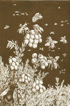 Bees & berries...