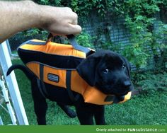 I almost forgot my briefcase! It has important lab results