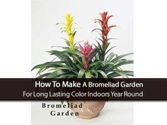 Whether you own a small apartment and have a few plants around, or you have a gigantic house with a large array of plants, you probably want to keep the plants healthy and vibrant with color. Creating your own bromeliad garden is very simply and easy, and could be the fast and affordable solution to …