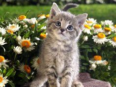 spring flowers, kitten, beauty beast, funny cats, sleeping animals