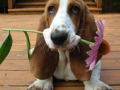 Good news/bad news - I dug up your garden, but only 'cause I wanted to give you this.