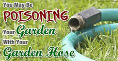 Be Careful: Your Garden Hose Is Likely Contaminating Your Food