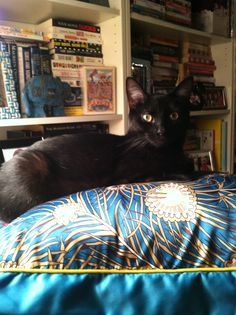 Cleopatra is a regal little lioness; sitting on her regal throne in front of her own personal library. Rather like her namesake.