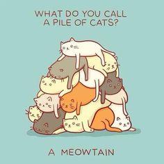 cheesy jokes, cat jokes, cheesi joke, quot