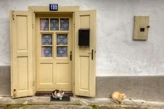 Cream door and cats, Slovakia