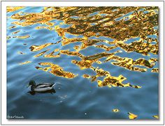 Golden fear - Amsterdam canals, Nederland