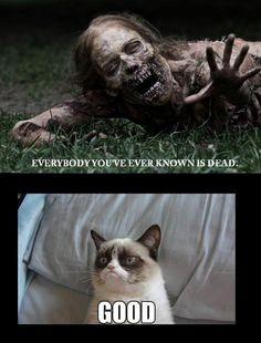 Grumpy cat <3 So mean! Lol