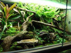 Vivarium with very nice plants!