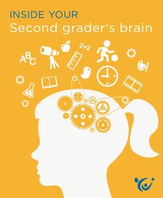 What insights can neuroscience offer parents about the mind of a second grader?