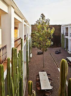 cacti courtyard /  Azul Oaxaca Hotel