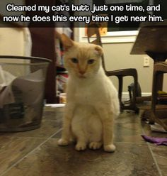 funny-clean-cat-butt-traumatized