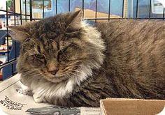 Cat Adoption Somerset Nj