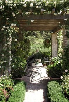 Lovely arbor with white climbing roses.