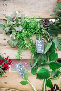 DIY living wall seating chart, photo by Izzy Hudgins Photography http://ruffledblog.com/diy-palette-vertical-garden #diyproject #seatingchart