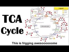 """The Krebs Cycle, rapped to the tune of Macklemore's """"Thrift Shop"""" Where was this when I was in undergrad?"""