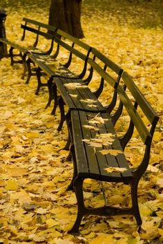 I love golden leaves.