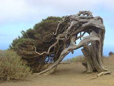 10 Strangest Trees on Earth | ZuZu Top