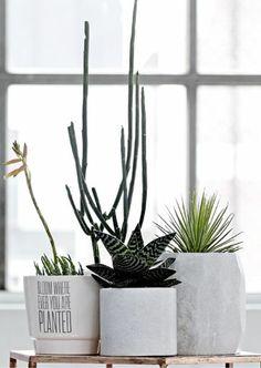 cactus plants, plant pots