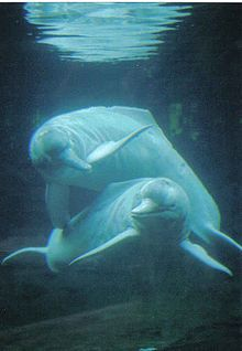 A boto (usually pink Amazon River Dolphin, and a regular dolphin)  http://3.bp.blogspot.com/-aDIsuImCqQs/T49wV35mmCI/AAAAAAAAAAk/lWG-Cp0bAK8/s1600/boto%2Bdolphin.jpg