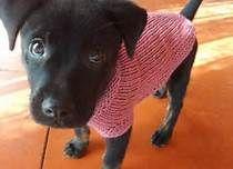 tejidos para perritos - Bing Imágenes
