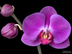 Orchid Slideshow - Answers in Genesis