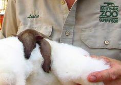 Sloth cuddles.