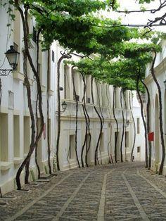 Unique tree-lined street in Jerez, Spain.