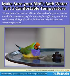 make sure your bird s bath water is at a comfortable temperature