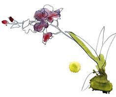 Boråstapeter Flora