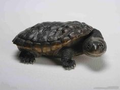 I was obsessed with turtles when i was tiny