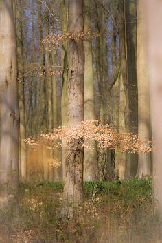 ☀Hug a tree today.com by Grandpops Woodlice*