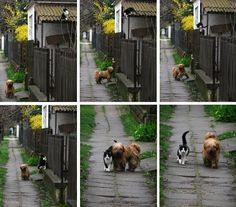 Every day - at the same time - she waits for him...    He comes... and they go for a walk