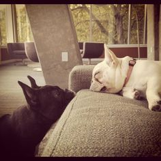 """""""Wake up to play already!""""  Biscuit & Lola  Submitted by Little Miss Biscuit"""
