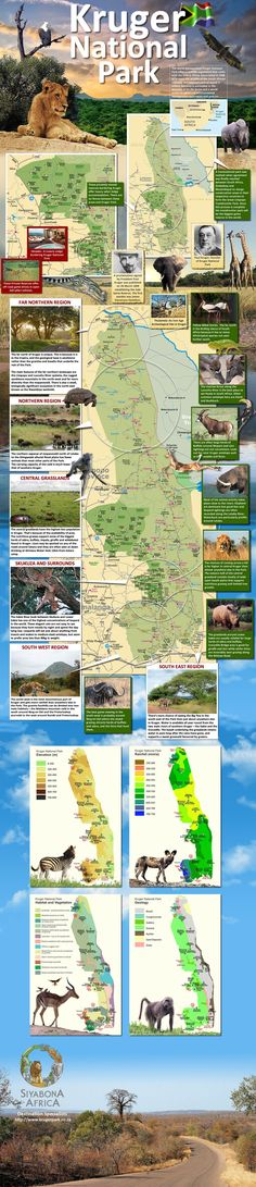 KRUGER NATIONAL PARK (INFOGRAPHIC) ::: SOUTH AFRICA southafrica, nation park, kruger national park, dream, kruger park, national parks, place
