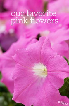 Pink flowers can add a bold or delicate touch to the garden depending on which shades you use: http://www.bhg.com/gardening/design/color/pink-flower-garden-ideas/?socsrc=bhgpin102914pinkflowers