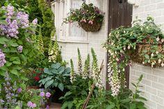 plant, window box, cottage gardens, cottages, spring bloom