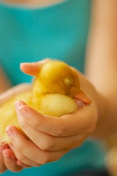 What A Cute Duckling
