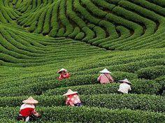 Hoy soñamos con viajar a Nepal, a través del sabor de su té