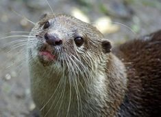 Otter wants a kiss.