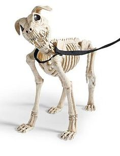 Thrill your neighbors and guests this Halloween with the realistic and chilling Skeleton Dog on Leash; the perfect watch dog or low-maintenance companion.