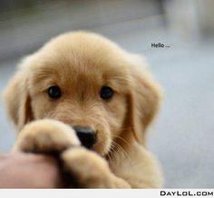 Shy puppy