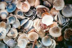 Shells.