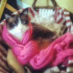 """Un foulard non é tale se non lo si puó condividere! :) #stefanel #foulard""""#contest"""
