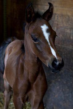 Foal Love